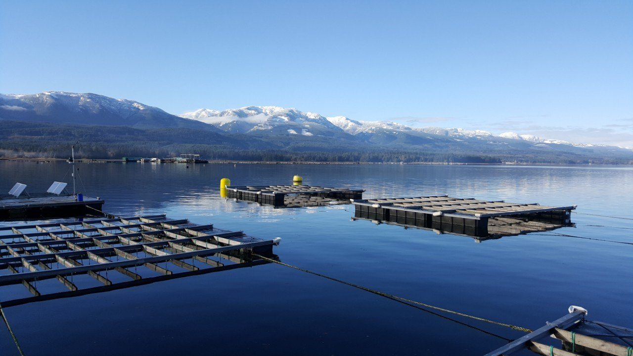 Image of geoduck farm in calm water